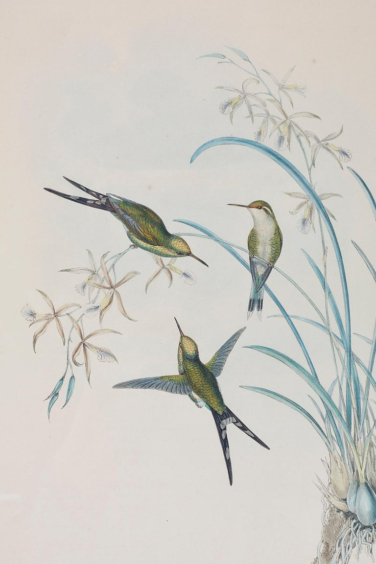 Pair of John Gould Ornithological Colored Hummingbird Prints For Sale 2