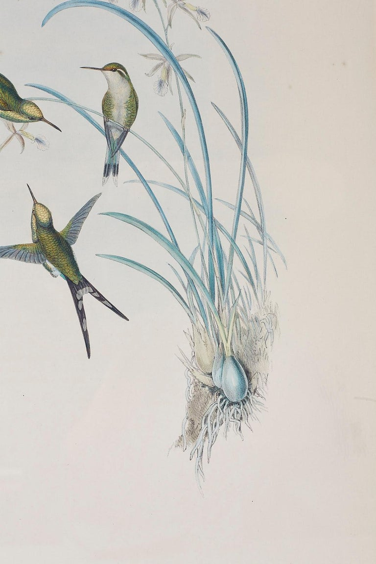 Pair of John Gould Ornithological Colored Hummingbird Prints For Sale 3
