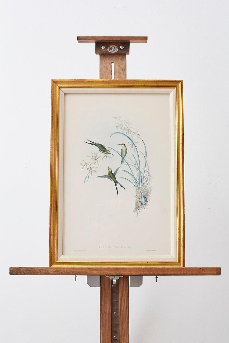 Pair of John Gould Ornithological Colored Hummingbird Prints For Sale 4