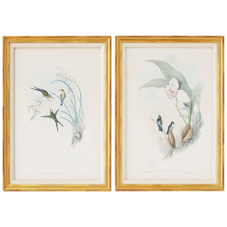 Pair of John Gould Ornithological Colored Hummingbird Prints For Sale