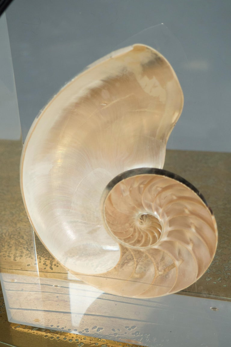 Each lamp consisting of a rectangular, clear acrylic block featuring a halved spiral seashell. Nickel hardware, rayon cords.