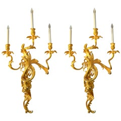 Pair of Large 19 Century French Gilt Bronze Louis XV Style Sconces