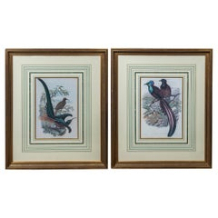 Pair of Large Framed Prints of Birds