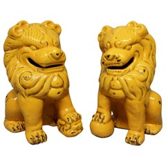 Pair of Large Saffron Glazed Dogs of Foo