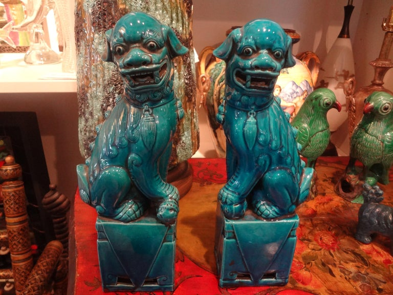 Stunning large pair of early 20th century Chinese Peking blue foo dogs or foo lions. This great pair of Chinese foo dogs are older with richer color than the later ones executed in a lighter turquoise glaze. Our pair of Chinese foo dogs or foo lions