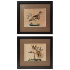Pair of Late 19th Century Paintings Taxidermy Birds, Germany