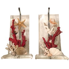 Pair of Lucite Lamps with Coral and Sea Shells