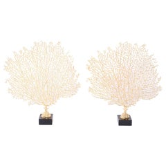 Pair of Midcentury Metal Sea Fan Sculptures