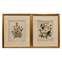 Mrs. Loudon's Pair of 19th Century Botanical Prints