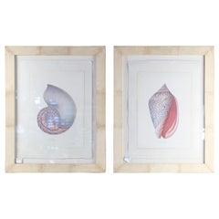 Pair of Nautilus Shell Prints