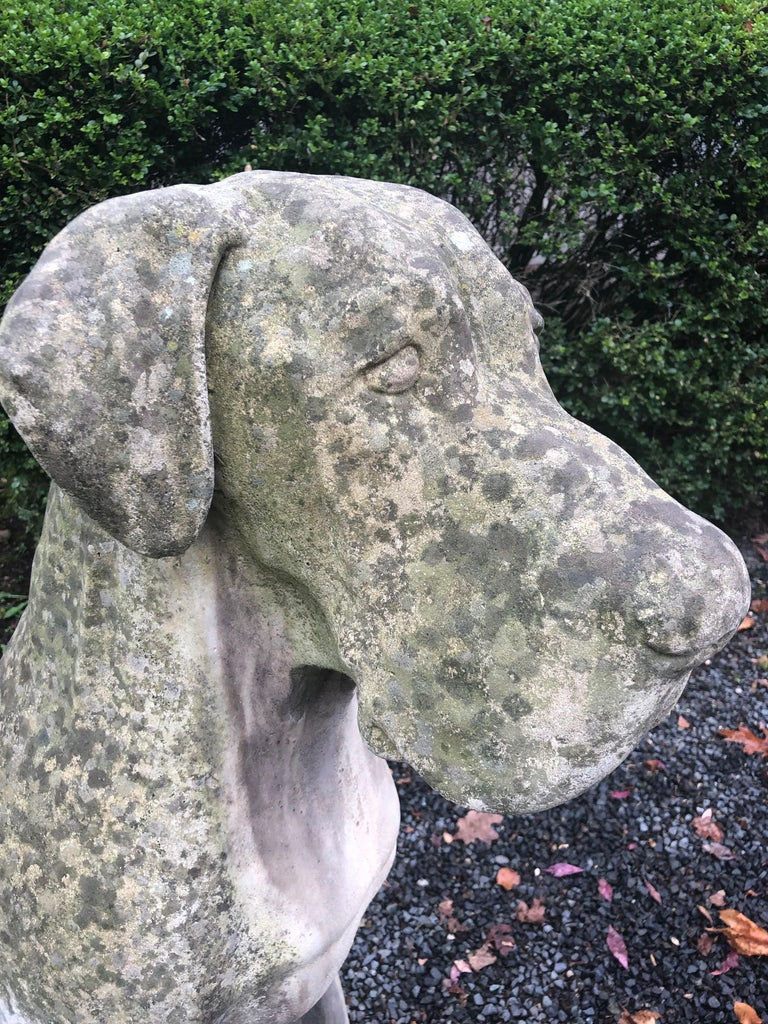 Pair of Over-Scale English Cast Stone Great Dane Dogs with Superb Patina For Sale 9