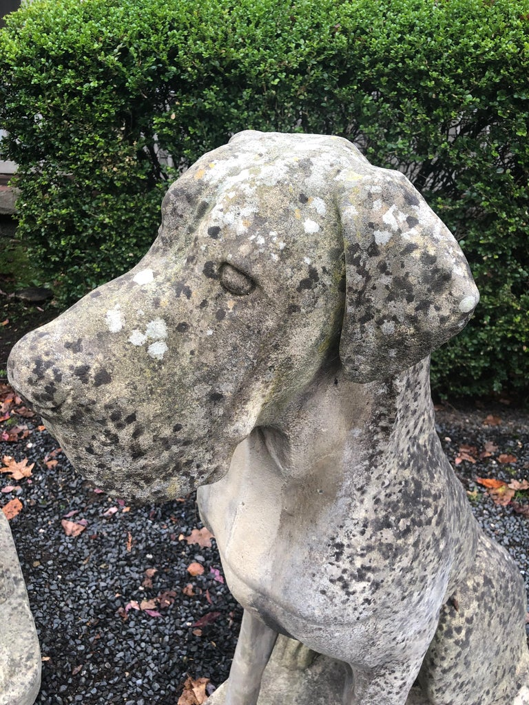 Pair of Over-Scale English Cast Stone Great Dane Dogs with Superb Patina For Sale 10