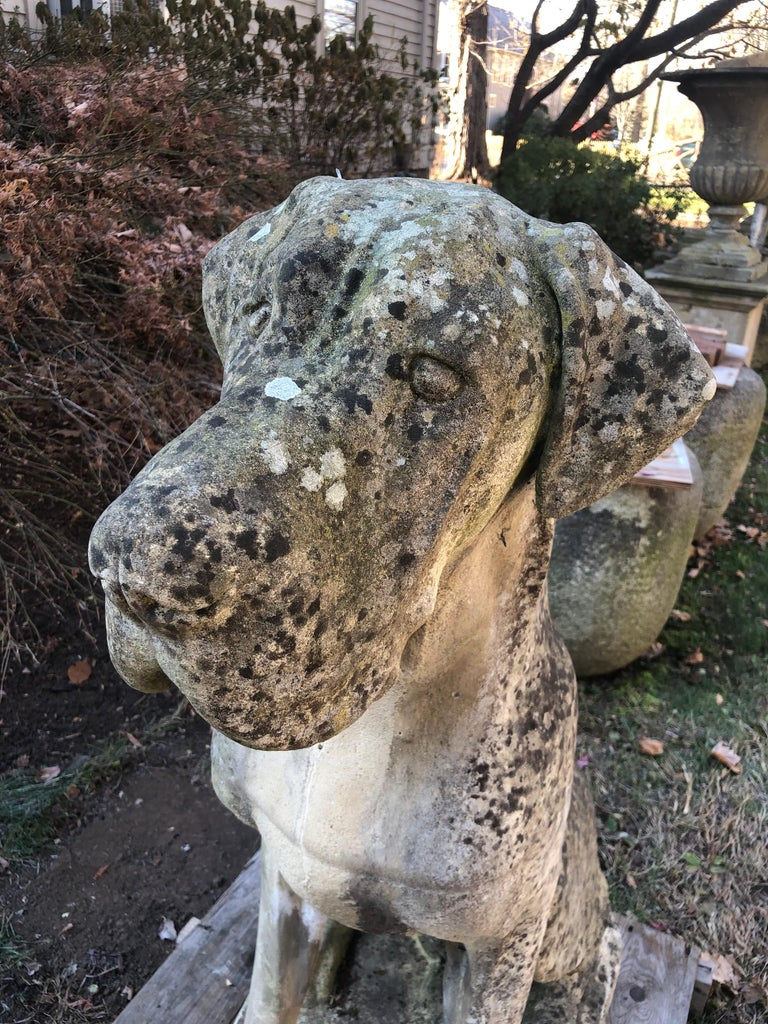 Pair of Over-Scale English Cast Stone Great Dane Dogs with Superb Patina For Sale 11