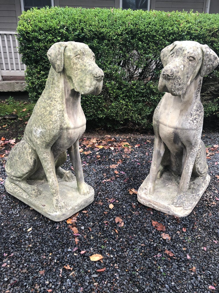 The scale and look of these Great Dane figures is simply superb. Cast as an identical seated pair, with slightly cocked heads and undocked ears, they feature a beautiful patina with excellent weathering enhanced by lichen and acid rain. One dog has