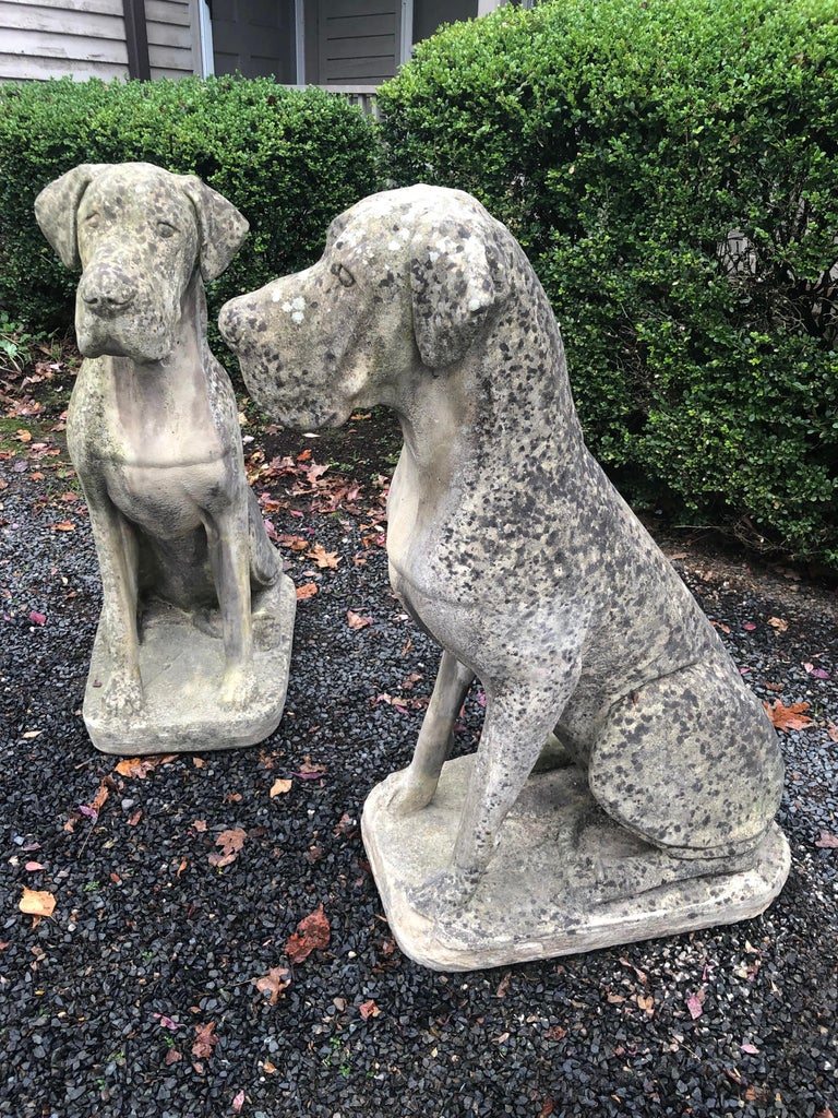 Pair of Over-Scale English Cast Stone Great Dane Dogs with Superb Patina In Good Condition For Sale In Woodbury, CT