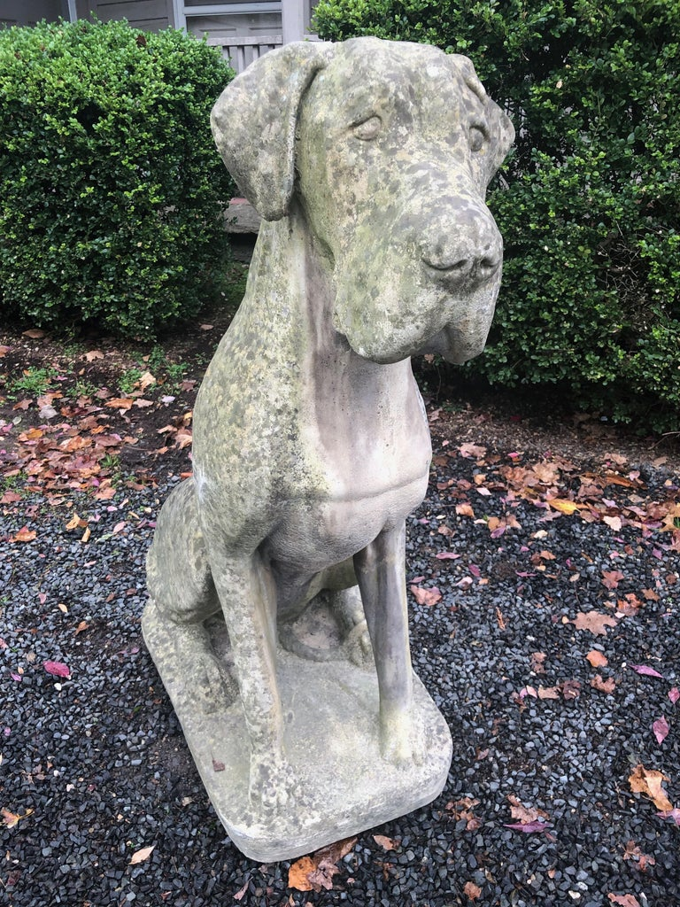 20th Century Pair of Over-Scale English Cast Stone Great Dane Dogs with Superb Patina For Sale