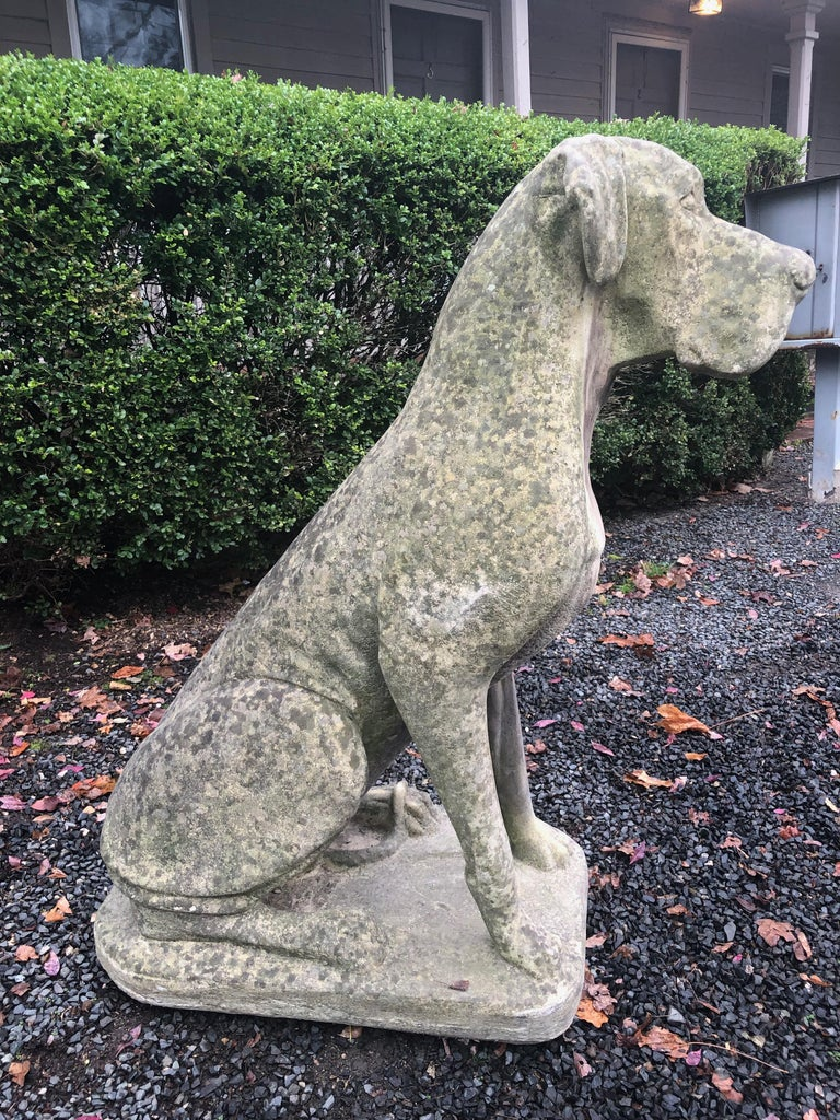 Pair of Over-Scale English Cast Stone Great Dane Dogs with Superb Patina For Sale 1
