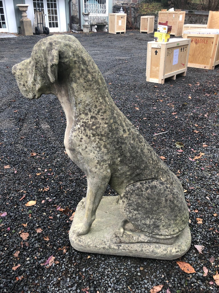 Pair of Over-Scale English Cast Stone Great Dane Dogs with Superb Patina For Sale 3