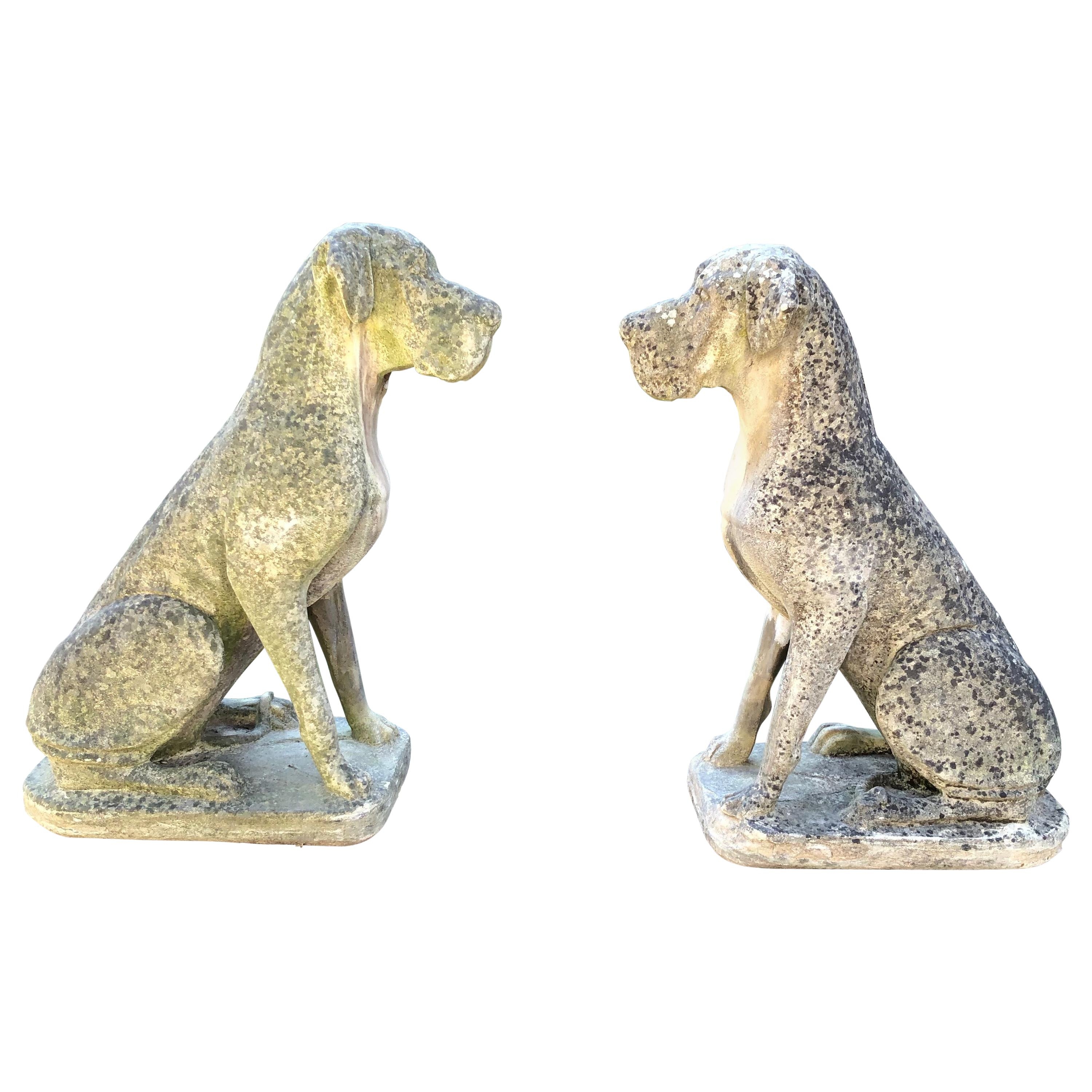 Pair of Over-Scale English Cast Stone Great Dane Dogs with Superb Patina
