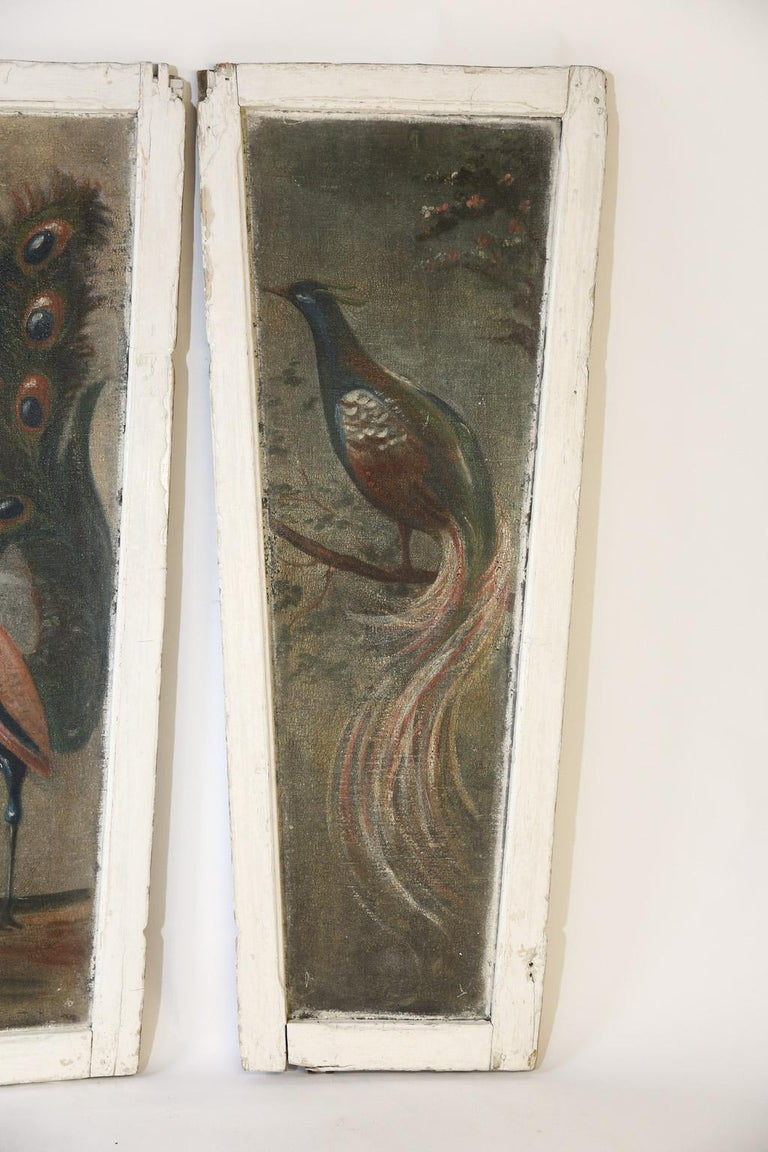 English Pair of Painted Peacock  Panels For Sale