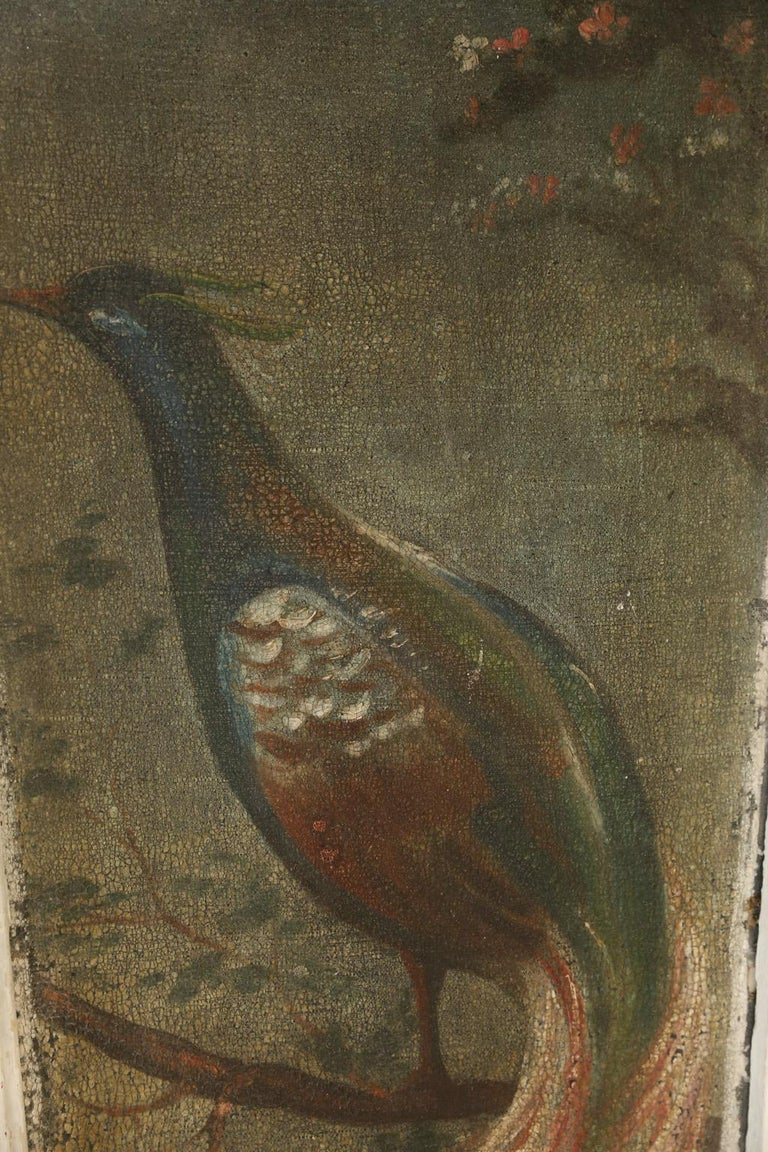 19th Century Pair of Painted Peacock  Panels For Sale