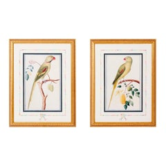 Pair of Parrot Prints