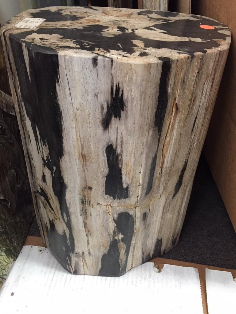 20th Century Pair of Polished Petrified Wood Side Tables For Sale