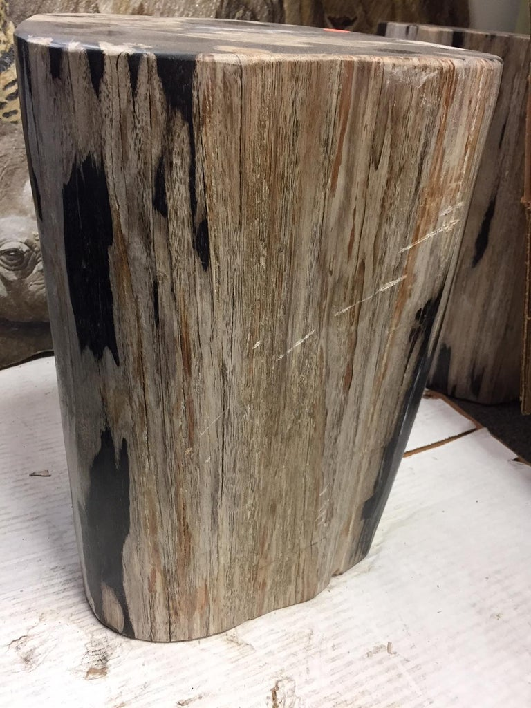 Reclaimed Wood Pair of Polished Petrified Wood Side Tables For Sale