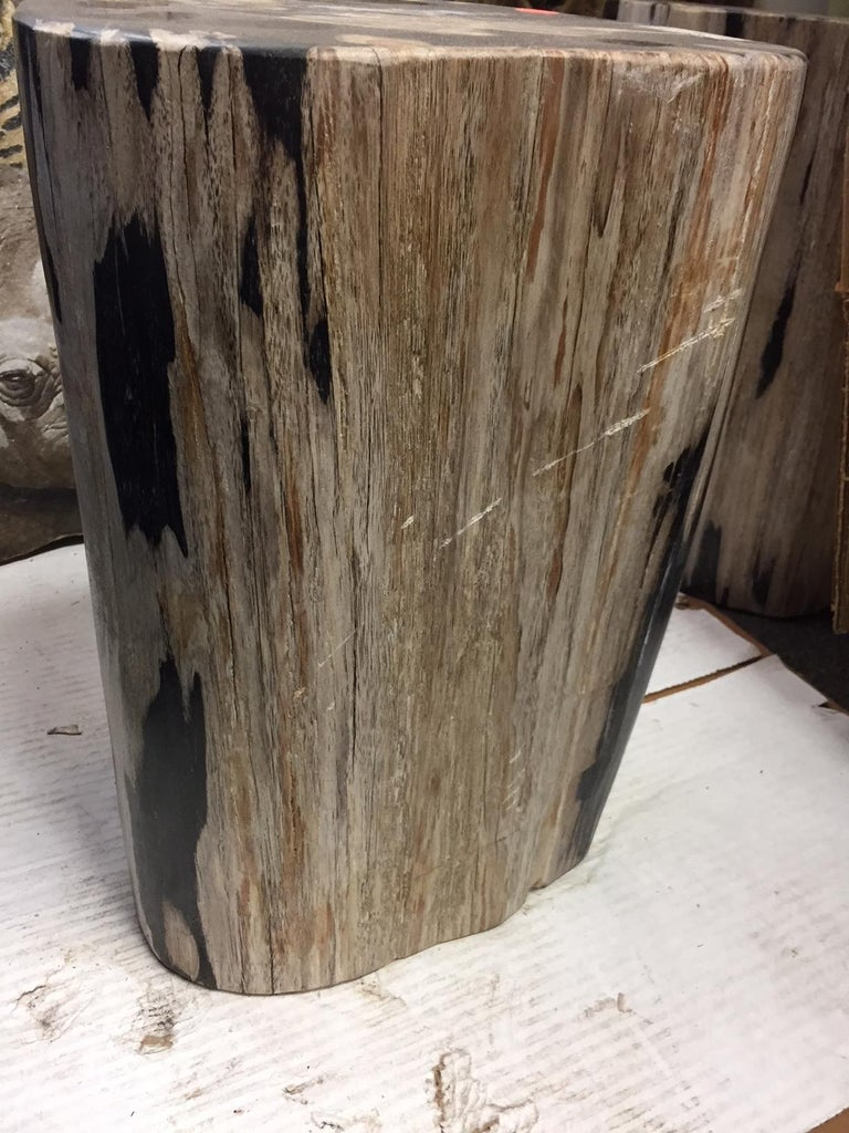 Pair of Polished Petrified Wood Side Tables For Sale 1