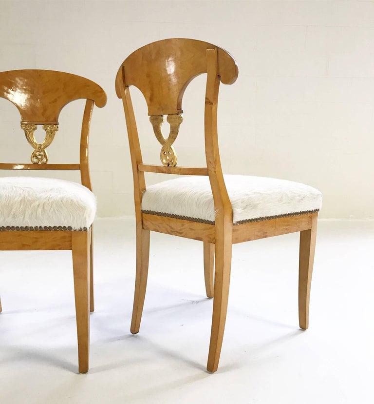 Pair of Satin Birch Biedermeier Chairs in Ivory Brazilian Cowhide, circa 1820 For Sale 1