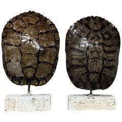 Pair of Small Genuine American Fresh Water Turtle Shells