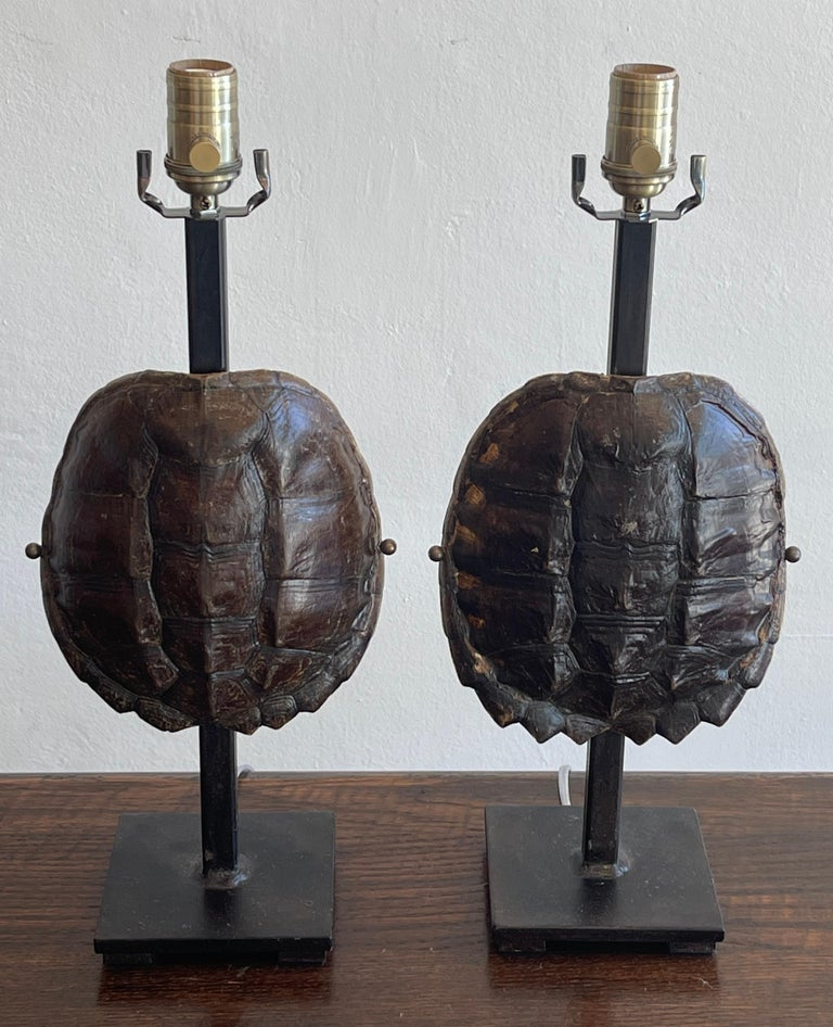 Pair of specimen tortoise shells, now as lamps Each one museum mounted on 5-inch square iron stands. New wiring. Each lamp measures 5-inch base x 8-inches wide x 13.5 inches to top of the shell, 19-inches to the socket.