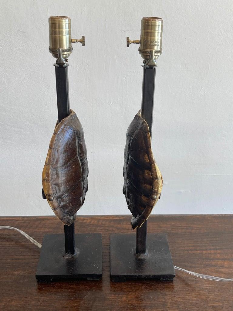 Modern Pair of Specimen Tortoise Shells, Now as Lamps For Sale