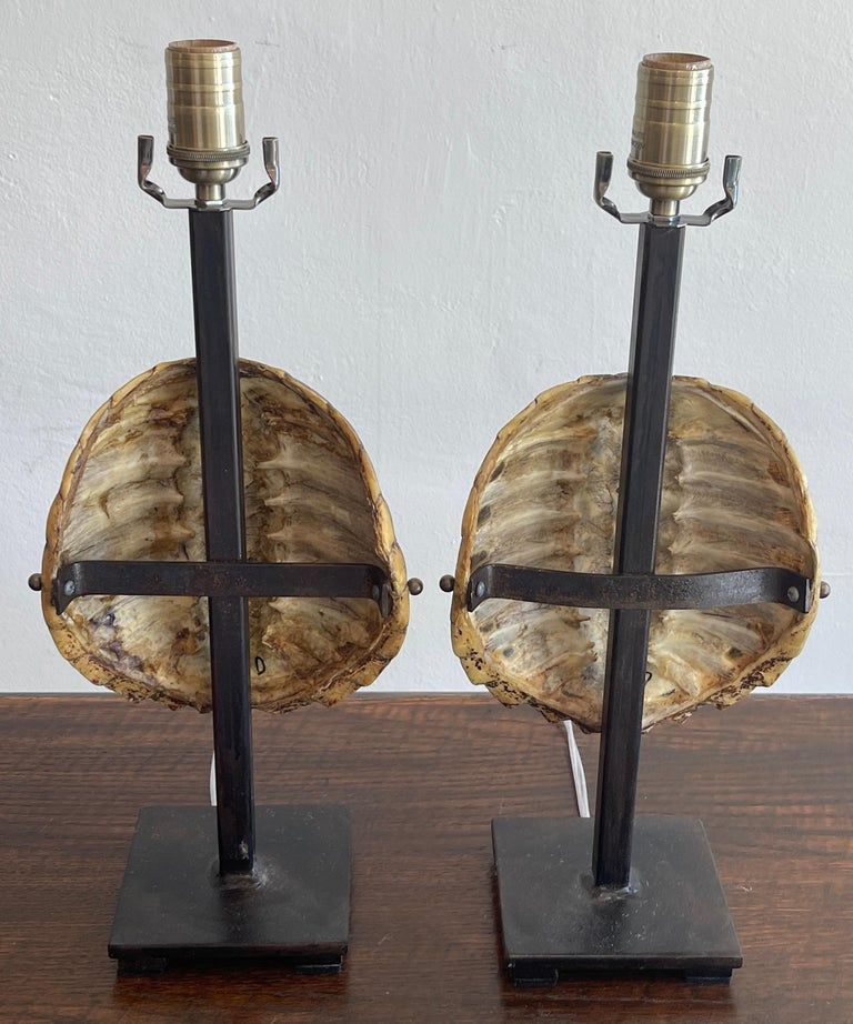American Pair of Specimen Tortoise Shells, Now as Lamps For Sale