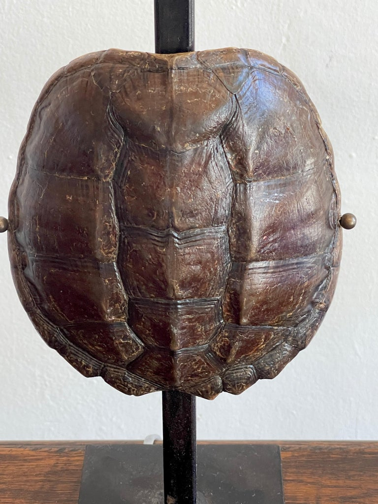 Iron Pair of Specimen Tortoise Shells, Now as Lamps For Sale