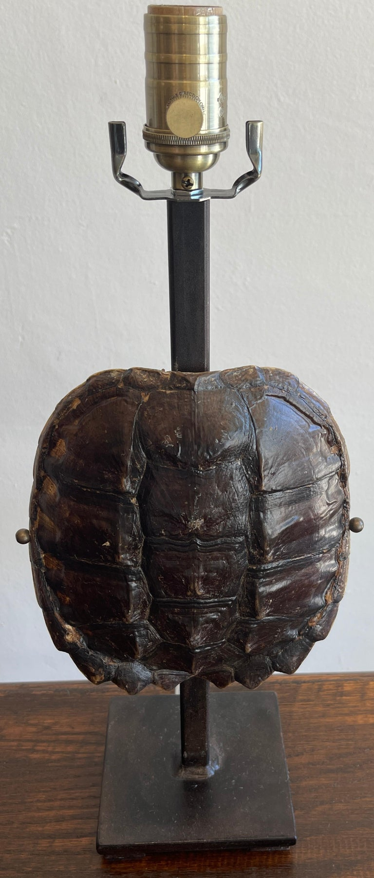 Pair of Specimen Tortoise Shells, Now as Lamps For Sale 1