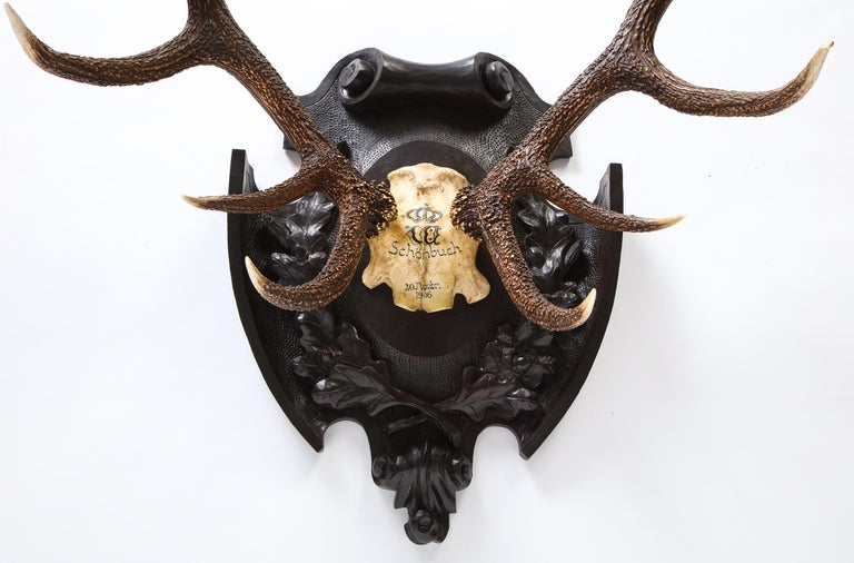 Pair of Swiss 'Black Forest' Antler Carved Trophy Mounts, Dated 1906 and 1906 For Sale 6
