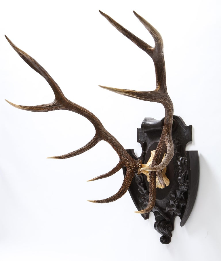 Pair of Swiss 'Black Forest' Antler Carved Trophy Mounts, Dated 1906 and 1906 In Good Condition For Sale In New York, NY