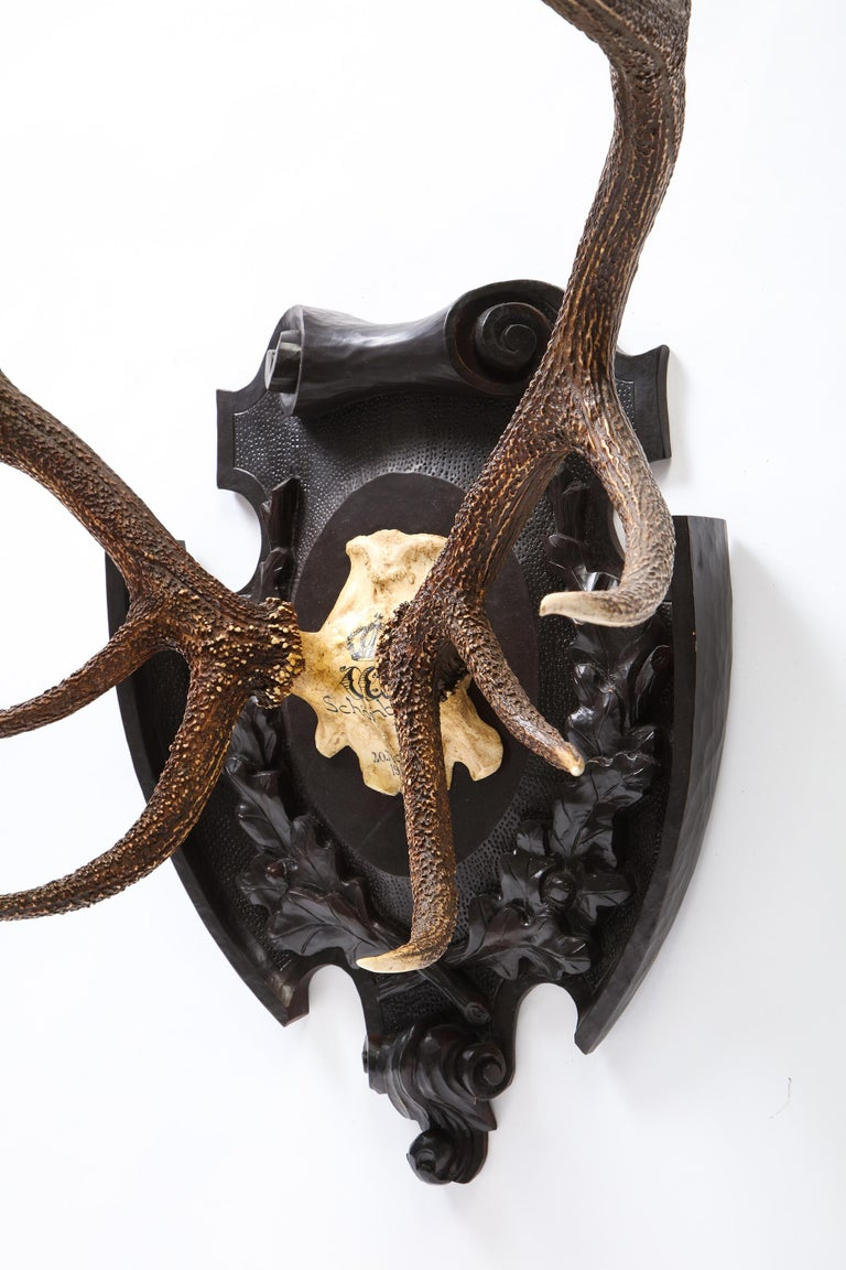 Pair of Swiss 'Black Forest' Antler Carved Trophy Mounts, Dated 1906 and 1906 For Sale 12