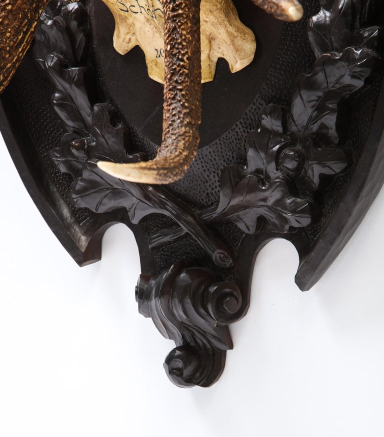 Pair of Swiss 'Black Forest' Antler Carved Trophy Mounts, Dated 1906 and 1906 For Sale 13