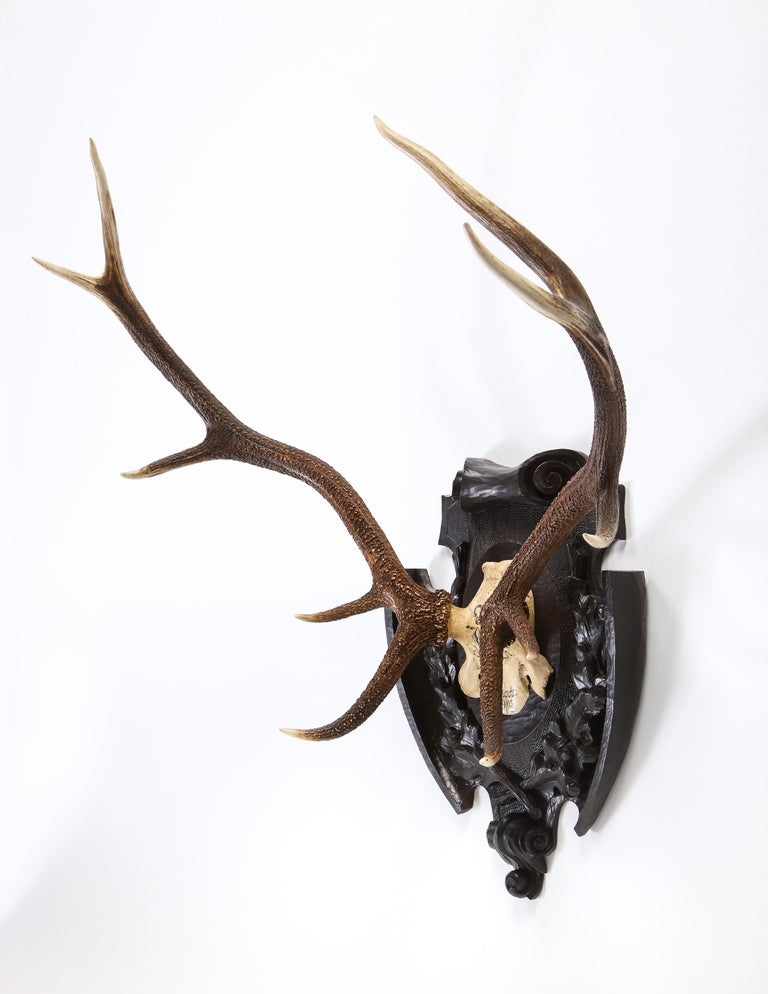 "An impressive pair of Swiss 'Black Forest' antler carved trophy mounts, dated 1905 and 1906. These large antlers are mounted on carved wooden backplates. One is inscribed 'Schonbuch 2.Novbr./1905,', the other ""Schonbuch 2.Novbr./1906"". Both skulls"