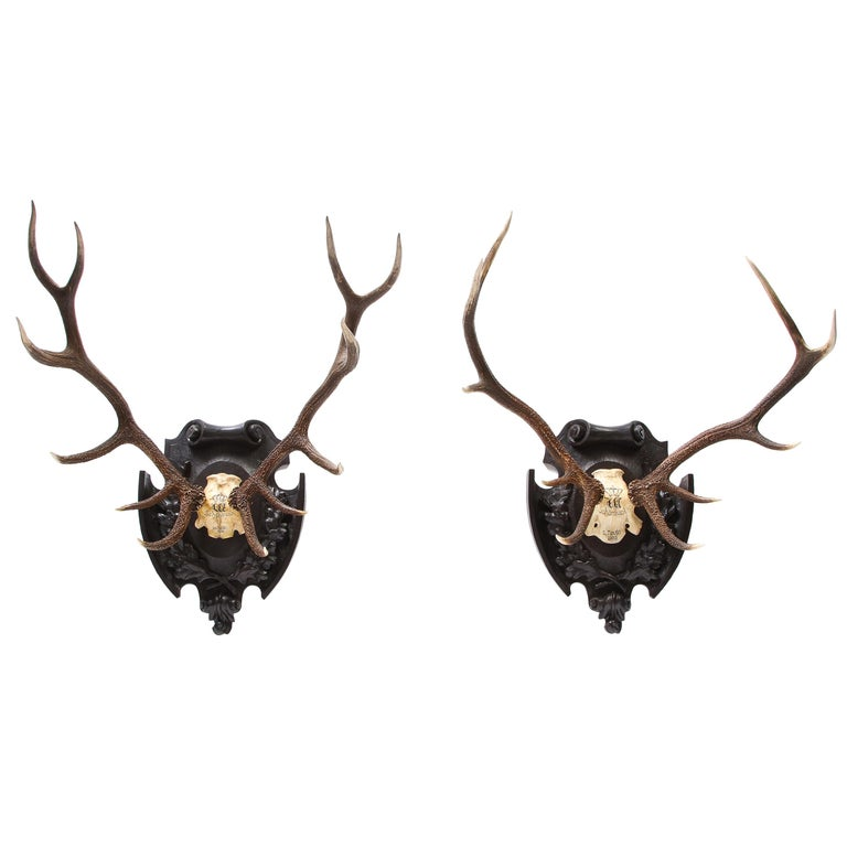 Pair of Swiss 'Black Forest' Antler Carved Trophy Mounts, Dated 1906 and 1906 For Sale