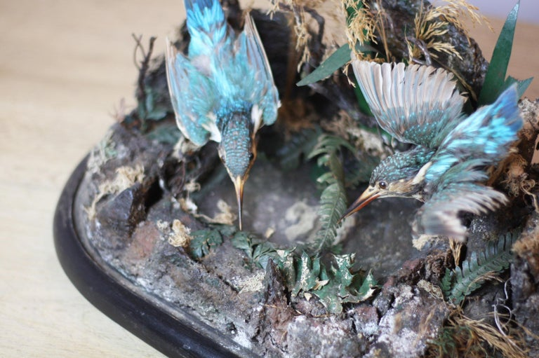 Pair of Taxidermy Kingfishers in Victorian Domed Glass Case In Good Condition For Sale In Tetbury, Gloucestershire
