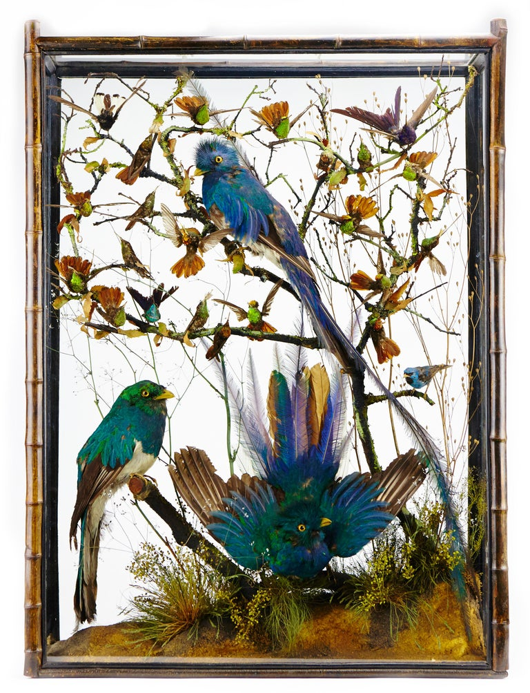 A pair of extremely rare Victorian display cabinets with taxidermy resplendent quetzal (PHAROMACHRUS MOCINNO), cotinga and hummingbirds, attributed to Henry Ward (1812-1878)