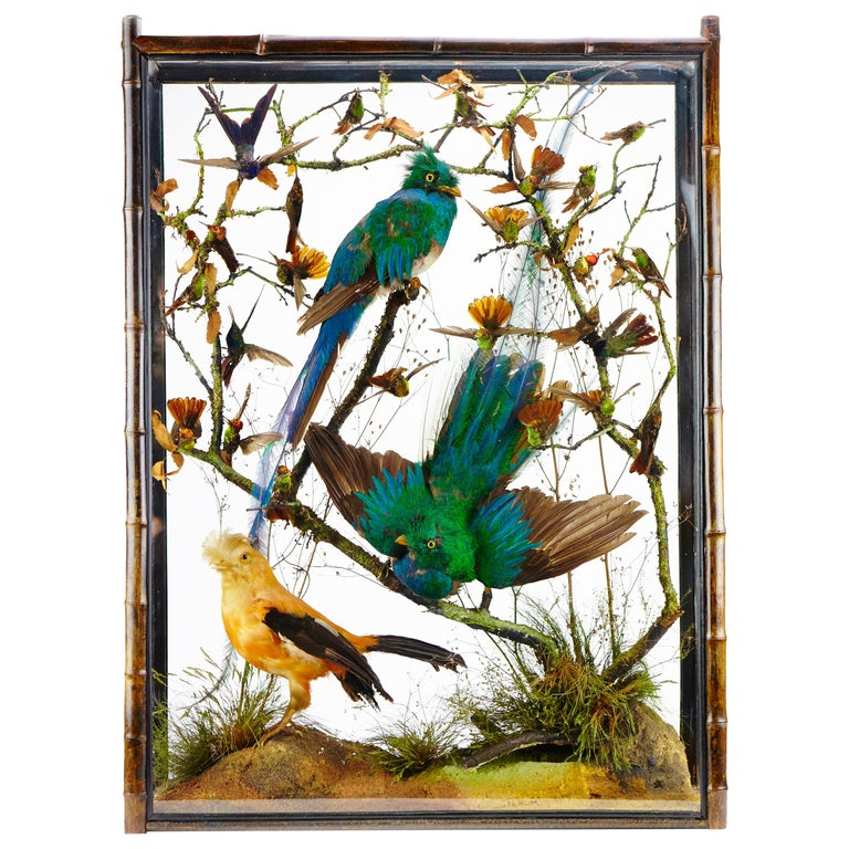 Pair of Victorian Cabinets with Taxidermy Quetzal by Henry Ward For Sale