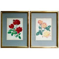 Pair Of Vintage Rose Flower Prints