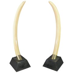 Pair Tall Faux Elephant Tusks Mounted on Bases