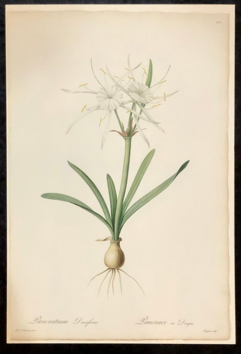 French Pancratium Disciforme Hand Colored Engraving Signed P.J. Redoute & Numbered For Sale