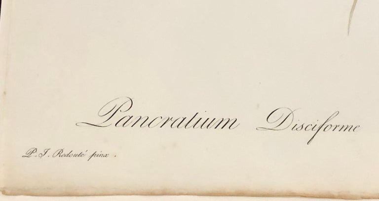Pancratium Disciforme Hand Colored Engraving Signed P.J. Redoute & Numbered For Sale 1