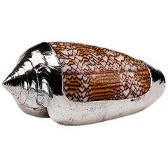Partially Silvered Sea Shell Conus Sebastian
